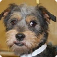 Adopt A Pet :: Elvis - North Benton, OH