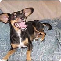 Adopt A Pet :: Q-tee - Phoenix, AZ