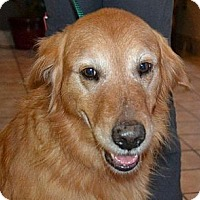 Adopt A Pet :: Beau - White River Junction, VT
