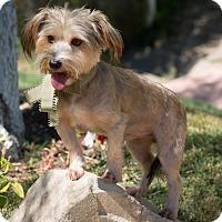 Adopt A Pet :: Marley - Sherman Oaks, CA