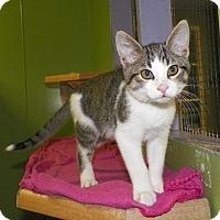 Adopt A Pet :: Fran the Man - Dover, OH