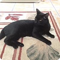 Adopt A Pet :: SPRING - Hamilton, NJ