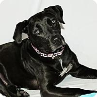 Adopt A Pet :: Pantera-Adopted! - Detroit, MI
