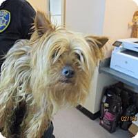 Adopt A Pet :: Niles - Oakland, CA