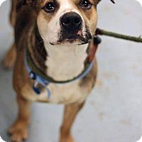 Adopt A Pet :: Spot - Mount Laurel, NJ