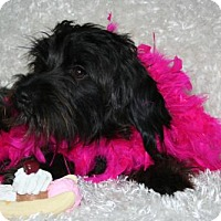 Adopt A Pet :: Kaia - Sioux Falls, SD