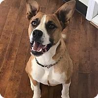 Adopt A Pet :: Bonnie - Charlotte, NC