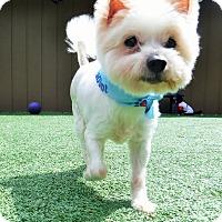 Adopt A Pet :: Lucky - Dublin, CA