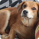 Adopt A Pet :: Galena