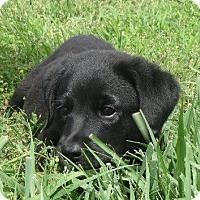 Adopt A Pet :: Molly May - Westport, CT
