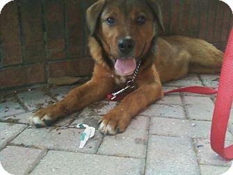 Shepherd (Unknown Type) Mix Dog for adoption in Largo, Florida - Ferdinand