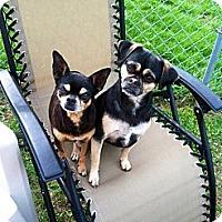 Adopt A Pet :: Scooter and Tiny! (Sponsored) - Hancock, MI