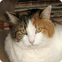 Adopt A Pet :: Butterphly - Mountain Center, CA