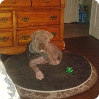 Adopt A Pet :: Rudy - Northumberland, ON