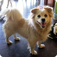 Adopt A Pet :: Tibby - Los Angeles, CA