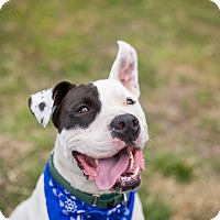 Adopt A Pet :: Royal - Portland, OR