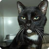 Adopt A Pet :: Alfred - Bradenton, FL