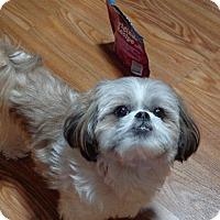Adopt A Pet :: Maddie-pending - Eden Prairie, MN