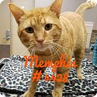 Adopt A Pet :: Memphis - Alvin, TX