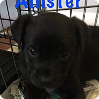 Adopt A Pet :: Allister - Detroit, MI