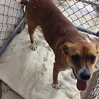 Adopt A Pet :: Stella - Ashland, AL