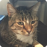 Adopt A Pet :: Friendly - Lafayette, NJ