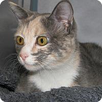 Adopt A Pet :: Raspberry - Ruidoso, NM