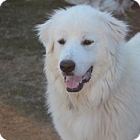 Adopt A Pet :: Michelle  *Adopted - Tulsa, OK