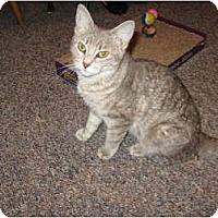Adopt A Pet :: Kensy - Jenkintown, PA