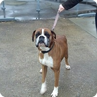 Adopt A Pet :: Steele - Brentwood, TN