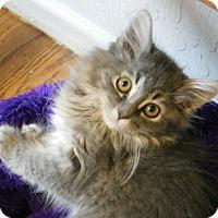 Adopt A Pet :: Cashmere - Davis, CA