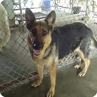 Adopt A Pet :: BARETTA! - Owenboro, KY