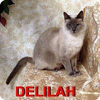 Adopt A Pet :: Delilah - Alvin, TX