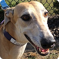 Adopt A Pet :: Turbo Farah - Longwood, FL