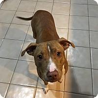Adopt A Pet :: Heidi - Walker, LA