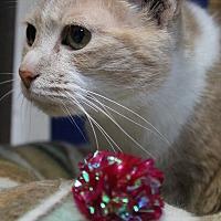 Adopt A Pet :: Sly - Richand, NY