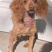 Adopt A Pet :: Ella - Birch Tree, MO
