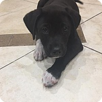 Adopt A Pet :: Easton - Royal Palm Beach, FL