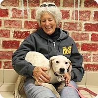 Adopt A Pet :: Norman - Elyria, OH