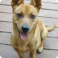 Adopt A Pet :: Jackie Little(20 lb) AWESOME - SUSSEX, NJ