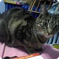 Adopt A Pet :: Pia - Lindenhurst, NY