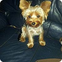 Adopt A Pet :: Royal - Fort Lauderdale, FL