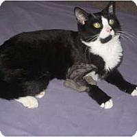 Adopt A Pet :: Kaboom - Jeffersonville, IN