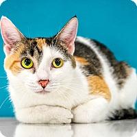 Adopt A Pet :: Twinkles - Chandler, AZ