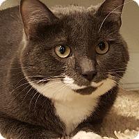 Adopt A Pet :: Bartholomew - Grayslake, IL