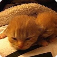 Adopt A Pet :: Tina & Travis - Xenia, OH
