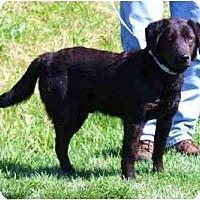 Adopt A Pet :: Ben - Toronto/Etobicoke/GTA, ON