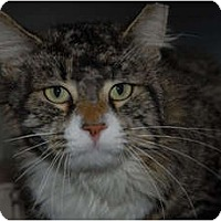 Adopt A Pet :: Lance - Lunenburg, MA