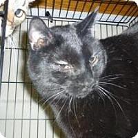 Adopt A Pet :: Salem - Milwaukee, WI