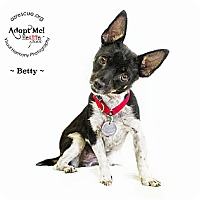 Adopt A Pet :: Betty - Phoenix, AZ